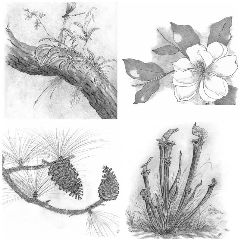 8 notecards_nature prints